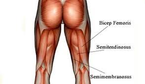 Funcionam da perna agachamentos que músculos
